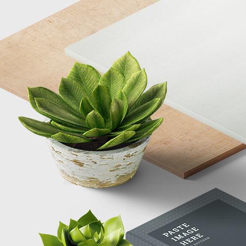 portfolio-office-plants-rock